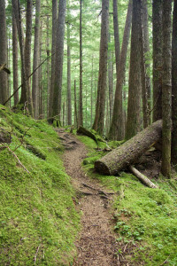 Trail to Odegaard Falls