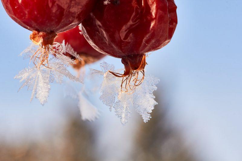 Frosty Fruit