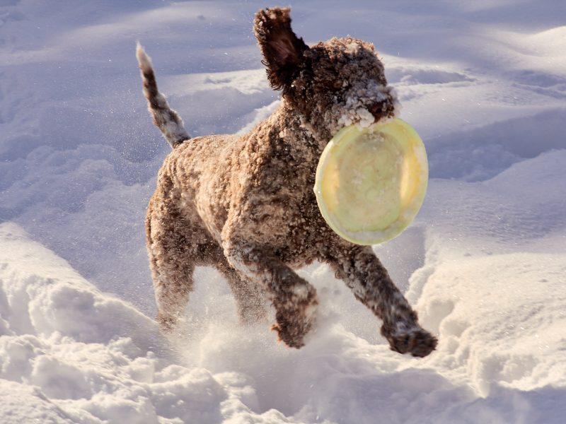 Winter Frisbee